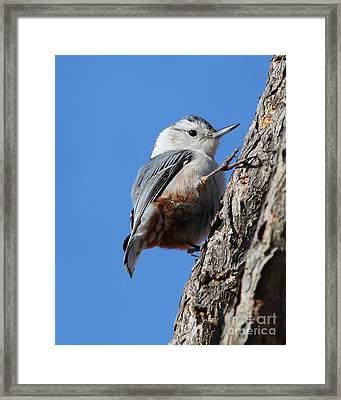 I Can Climb Too Framed Print by Anita Oakley