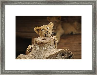 I Can Do This Framed Print by Keith Lovejoy