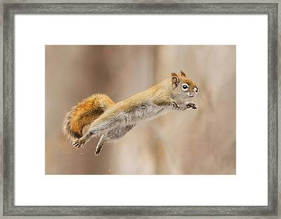 I Can Fly! Framed Print by Mircea Costina