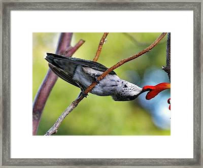I Can Get It Framed Print by Cindy Treger