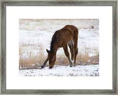 I Can Pick This Up Framed Print by Nicole Markmann Nelson