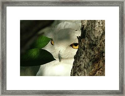 I Can See You Framed Print by Martina Fagan