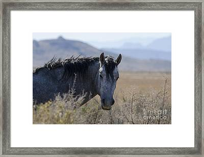 I Can See You Framed Print by Nicole Markmann Nelson