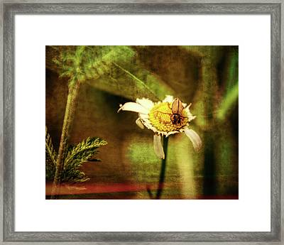 I Can't Believe I Ate The Whole Thing Framed Print by Winnie Chrzanowski