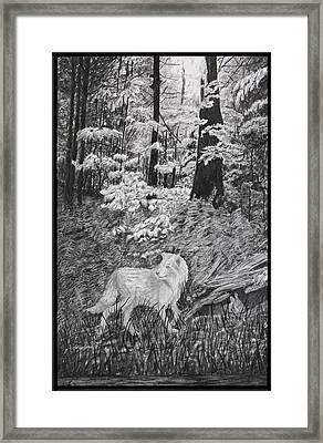 I Can't Find The Rabbit Framed Print