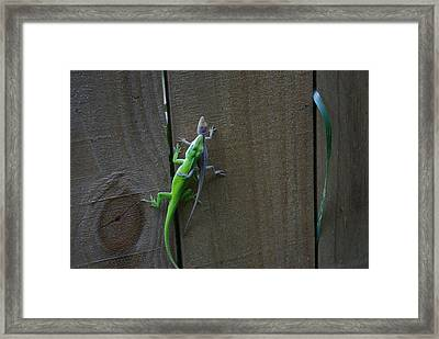 I Caught You Framed Print by Liliana Andrei