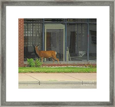 I Could Have Sworn I Saw Another Deer In There Framed Print by John Malone