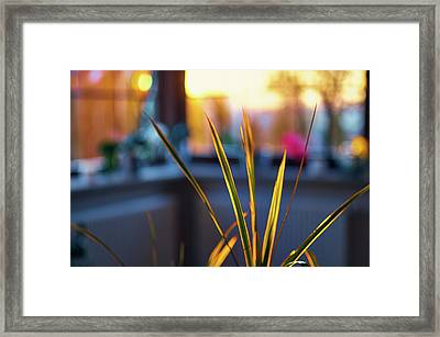 I Do Not Know Framed Print by Tgchan