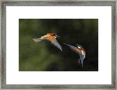 I Do Not Want You Framed Print by Marco Redaelli