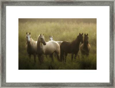 I Dreamed Of Horses Framed Print by Ron  McGinnis