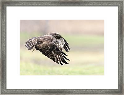 I Fly Away Framed Print