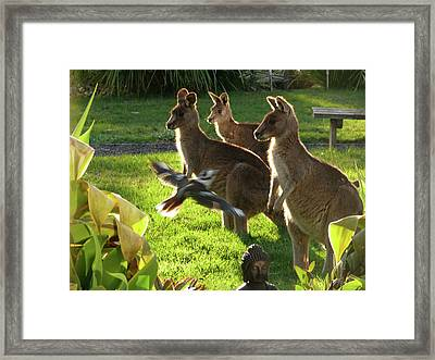 I Fly To You Framed Print by Evelyn Tambour