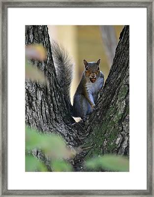 I Found It - It's Mine Framed Print by rd Erickson