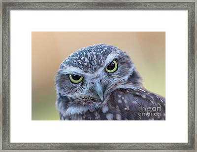 Framed Print featuring the photograph I Give A Hoot by Chris Scroggins