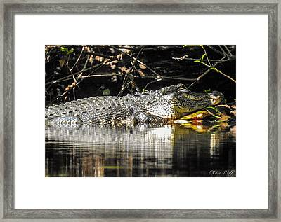 I Got It Made In The Shade Framed Print