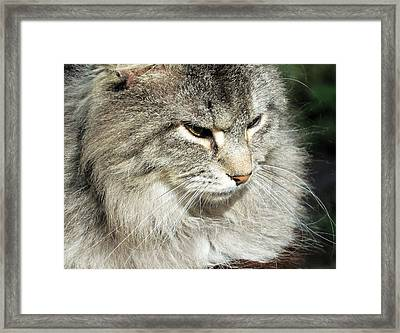 I Got My Eye On You Framed Print by Cathy Harper