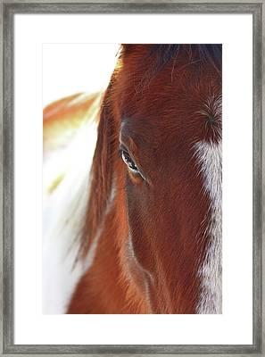 I Got My Eyes On You Framed Print by Evelina Kremsdorf