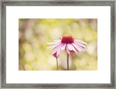 I Got Sunshine Framed Print by Beve Brown-Clark Photography
