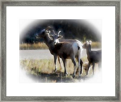 Framed Print featuring the photograph I Got Your Back by Robert Pearson