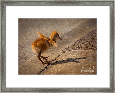 I Have A Wings Framed Print by Zina Stromberg