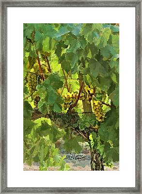 I Heard It On The Grapevine Framed Print by Patricia Stalter