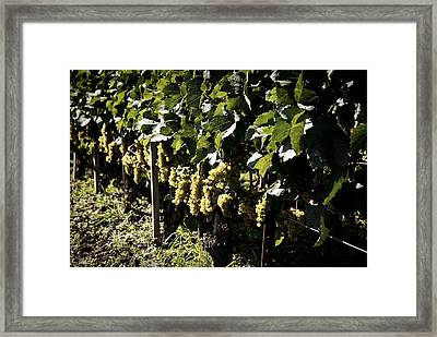 I Heard It Through The Grapevine Framed Print by Cabral Stock