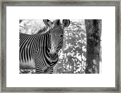 Her Gaze Framed Print by Jon Glaser