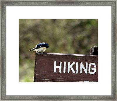 I Know Where You Are Going Framed Print