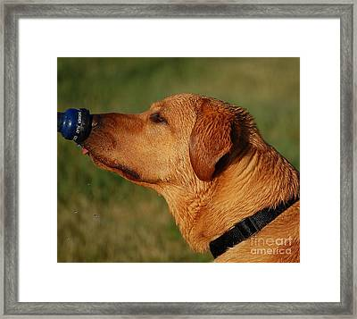I Know You Are In There Framed Print by Diane E Berry