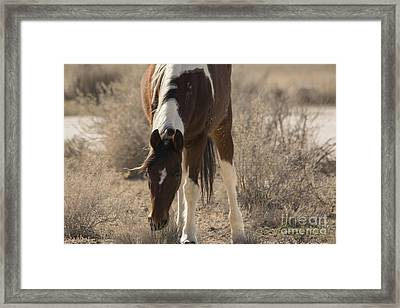 I Know You There Framed Print by Nicole Markmann Nelson