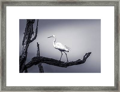 I Live Here Framed Print by Marvin Spates