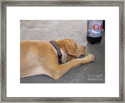 I Love Diet Coke Framed Print