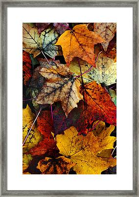 Framed Print featuring the photograph I Love Fall 2 by Joanne Coyle