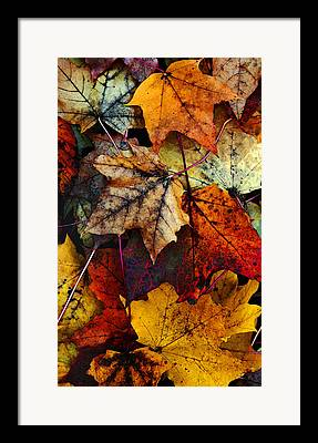 Fall Leaves Digital Art Framed Prints