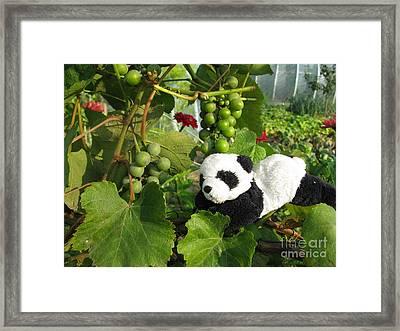 Framed Print featuring the photograph I Love Grapes Says The Panda by Ausra Huntington nee Paulauskaite