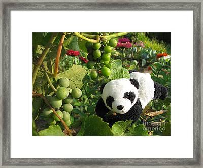 Framed Print featuring the photograph I Love Grapes B by Ausra Huntington nee Paulauskaite