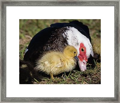 I Love My Mom Framed Print by Dawn Currie