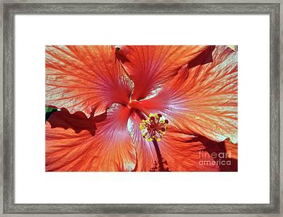 I Love Orange Flowers 2 Framed Print