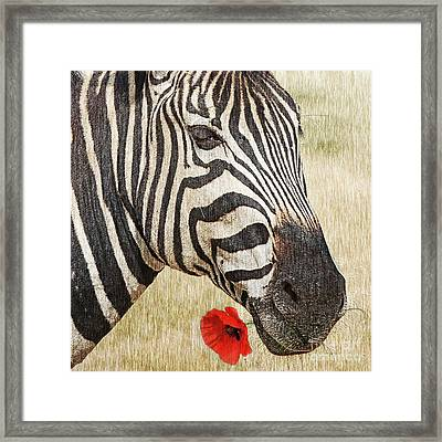 I Love Red Framed Print by Barbara Dudzinska