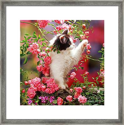 I Love Roses Framed Print