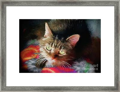 I Love This This Kitty 2017 Framed Print