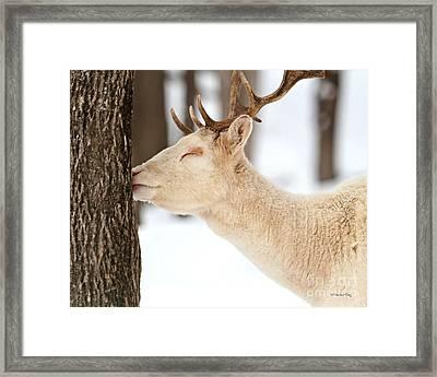 I Love This Tree Framed Print