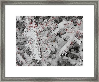 I Love Winter Framed Print by Carol Groenen
