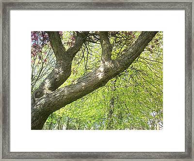 Framed Print featuring the painting I Love You Tree by Judith Desrosiers