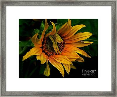 Framed Print featuring the photograph I Need A Comb by Elfriede Fulda