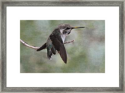 Framed Print featuring the photograph I Need A Napkin by Tammy Espino