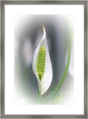 I Need My Spathe Framed Print by Mother Nature