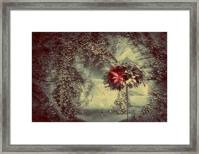 I Never Promised You A Rose Garden Framed Print