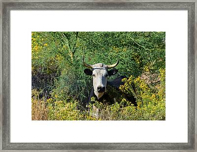 I Picked These For Moo Framed Print