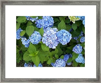 I Framed Print by Rosanne Bartlett